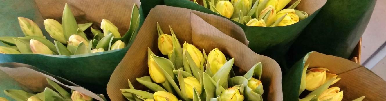 tulipaner - ny